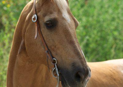 20_Pferd