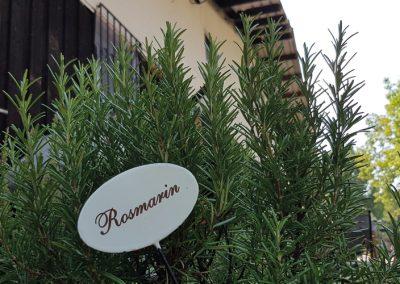 22_Rosmarin